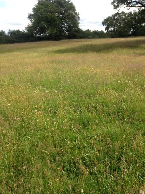 Melverley view