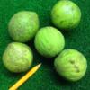 Juglans nigra fruit